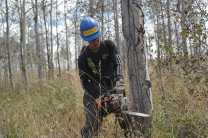Harper cutting down some dead aspens