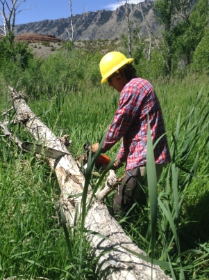 Erich working through a log