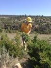 Claire removing juniper